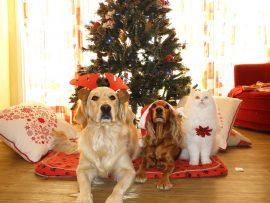 Deux chiens et un chat attendent devant un sapin de Noël